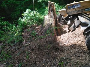 Stump removal for Sale in Annandale, VA