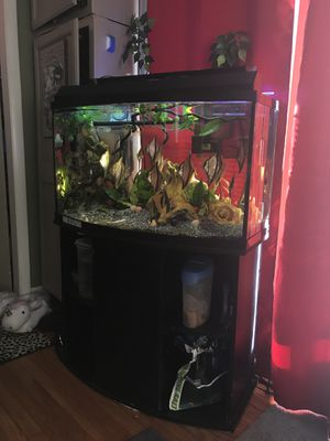 48 Gallon Bowfront Aquarium With Stand for Sale in Gardner, MA