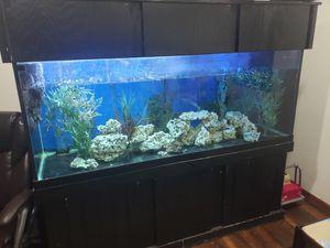 Aquarium 210gal set Canopie Cabinet full setup for Sale in Ontarioville, IL