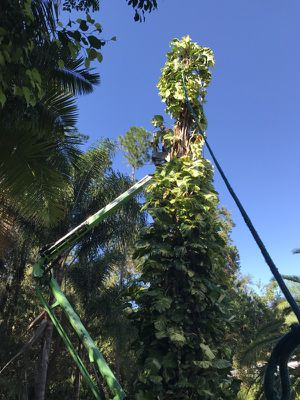 Lift work for Sale in New Port Richey, FL