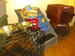 Pet supplies for a little dog for Sale in Hesperia, CA