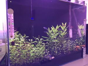 Complete Freshwater Aquarium System 21 gal for Sale in Des Moines, WA