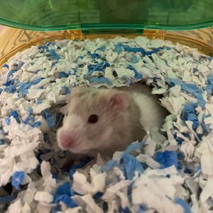 Hamster cage for Sale in Clearwater, FL