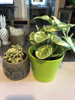 Live Indoor Plants in Ceramic Pots for Sale in Phoenix, AZ