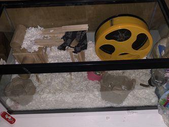 Hamsters for Sale in Newport Beach,  CA