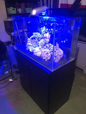 40 gallon coral reef fish tank aquarium for Sale in Pomona, CA