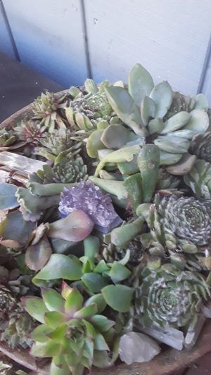 A BUNCH OF SUCCULENTS IN A PLANTER for Sale in Covington, WA