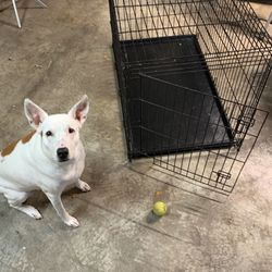 Dog Crate for Sale in Fort Lauderdale, FL