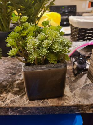 Artifical plants for Sale in Cumberland, VA