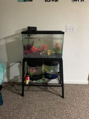 20 gallon tall tank for Sale in Kissimmee, FL