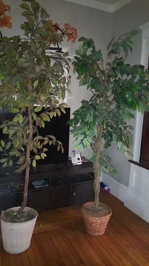 6ft Fake Tree Plants for Sale in Lynn, MA
