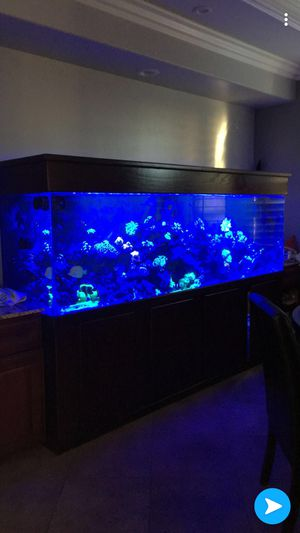 300 gallon clear for life reef aquarium and set up for Sale in Mission Viejo, CA
