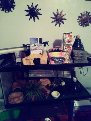 Total set up for a bearded dragon or other reptiles for Sale in Pittsburgh, PA