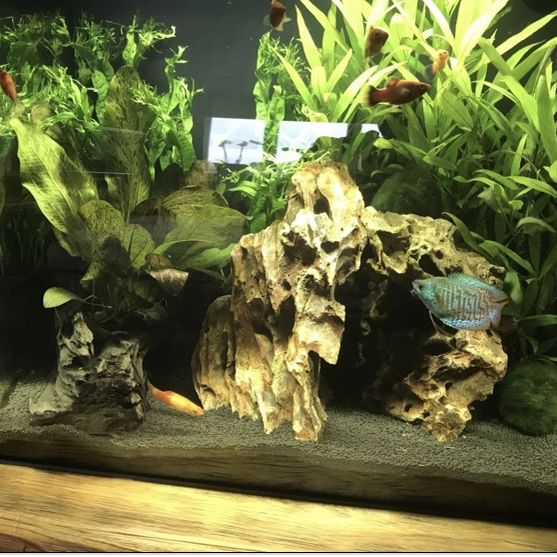 Excellent Condition 15gal Fluval Fish Tank