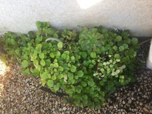 Plants for Sale in Stockton, CA