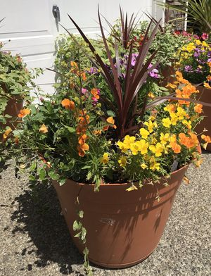 Beautiful huge huge flower pots for Sale in Renton, WA