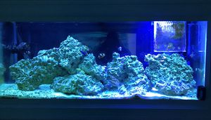 Saltwater Fish Tank FULL Setup for Sale in Newtown, CT