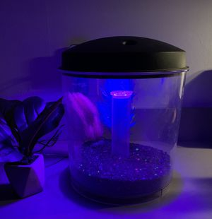 LED Fish tank come including Decor! for Sale in Queens, NY