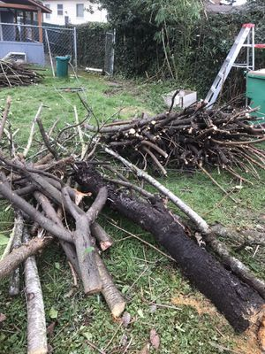 Free fire woods ( organic Cherries trees, pear trees, peach and regular trees) for Sale in Seattle, WA