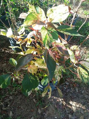 Plants for Sale in Haines City, FL