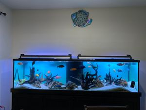 270 Gallon Fish Tank for Sale in Saginaw, TX