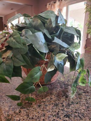Fake green plant for Sale in Corona, CA