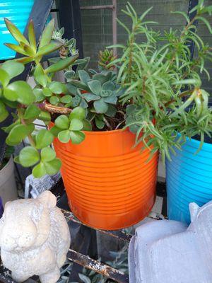 Succulents for Sale in Montclair, CA