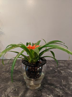 Soilless plants for sale for Sale in Chicago, IL
