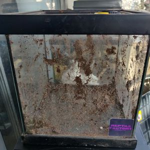 10x10x10 Box Glass Terrarium for Sale in Orange, CA