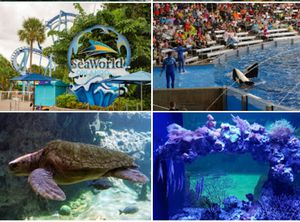 Sea World Tickets for Sale in Kissimmee, FL