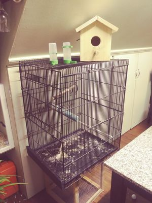 Bird cage, 30 inches height, 24 inches wide, 19 inches deep; can with bird house and food dispenser. for Sale in Lynn, MA