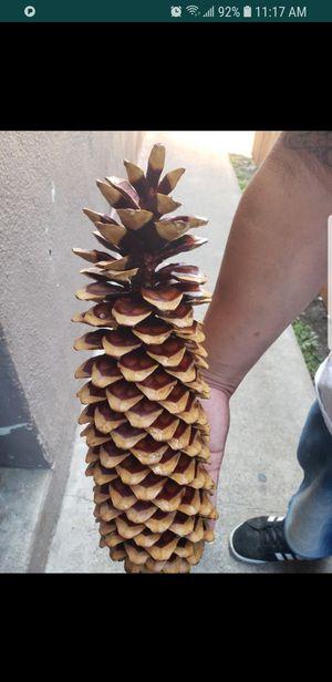 Pine cones Sugar for Sale in Lakewood, CA
