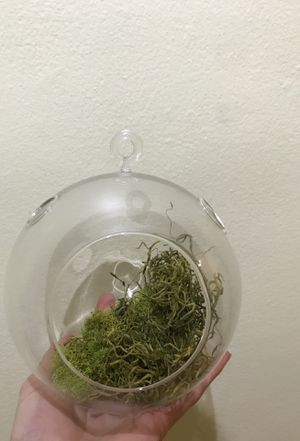 Glass terrarium air plant succulent hanging pot round sphere spherical for Sale in Brooklyn, NY
