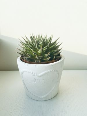 Succulent Plant - including pot, easy to treat! for Sale in New York, NY