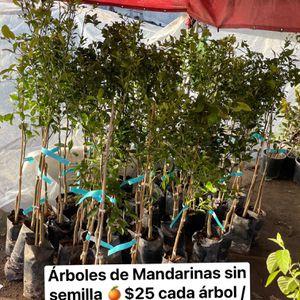 Árboles Frutales / Fruit Trees for Sale in Fresno, CA