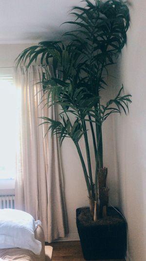Huge palm plant for Sale in Denver, CO