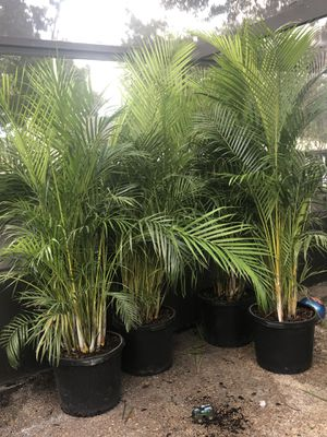 Trees for Sale in Fort Pierce, FL