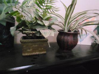 Fake Plants for Sale in Tucson,  AZ