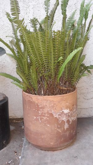 Plant for Sale in Westminster, CA