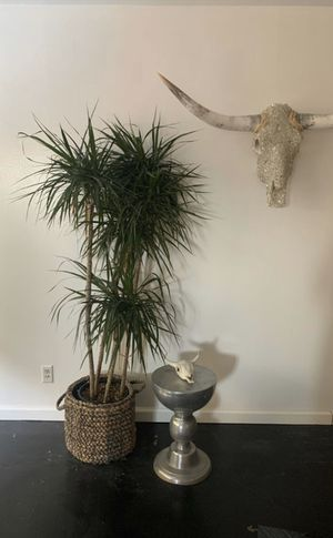 Large House Plant for Sale in West Hollywood, CA