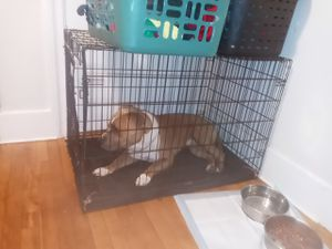 Dog cage for Sale in Worcester, MA