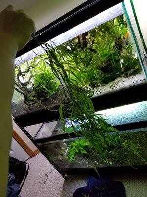 Aquarium plant for Sale in Seattle, WA