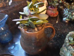 Cute succulents in ceramic pitcher for Sale in Chandler, AZ