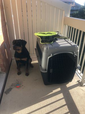 Large breed crate for Sale in Burlington, MA