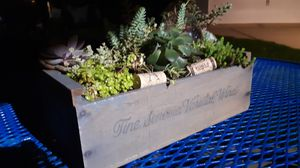 Succulent garden/planter for Sale in Downers Grove, IL