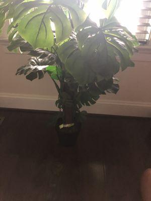 Plastic plant 20$ for Sale in Aldie, VA