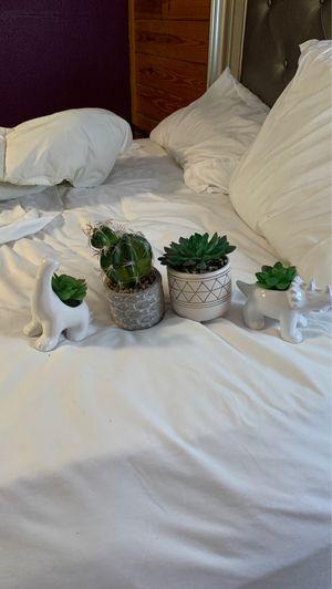 Decorative succulents for Sale in El Dorado, AR