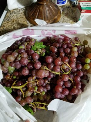 FREE organic grapes/😀Check out my other offers on my page. for Sale in Montebello, CA