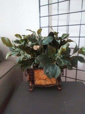 Hobby Lobby plants for Sale in Garland, TX