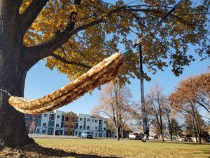 Furry hammock for Sale in Wenatchee, WA
